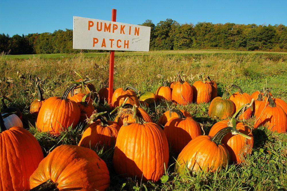 Health Benefits of Pumpkins_1