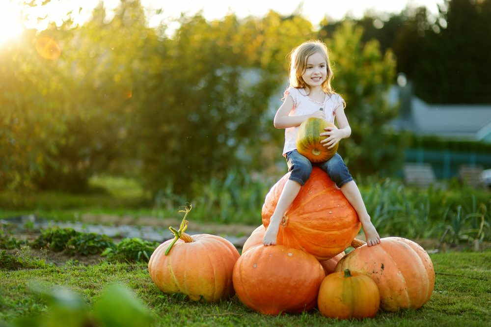 Health Benefits of Pumpkins_2