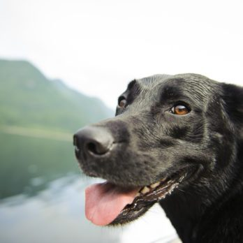 Yes, Dogs Really Can Smell Cancer
