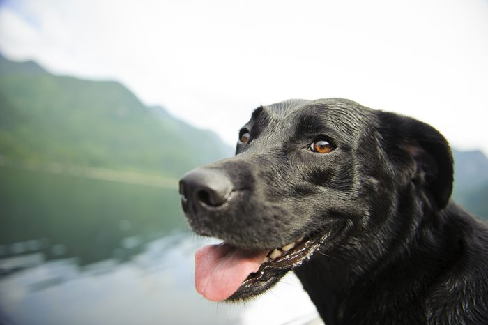 Dogs-Detecting-Cancer