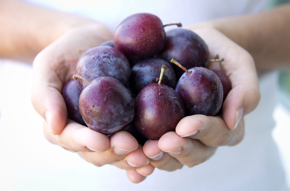 health_benefits_eating_plums_5