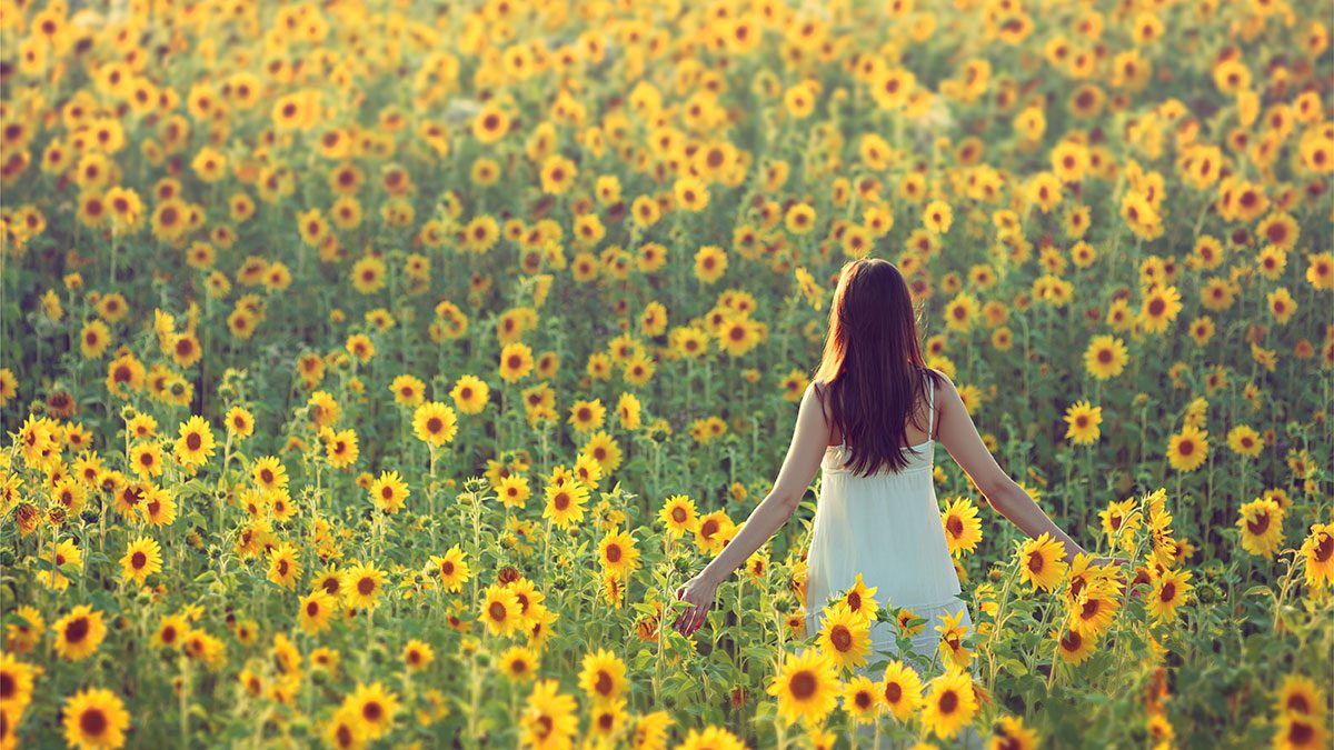 Benefits of nature, field of sunflowers