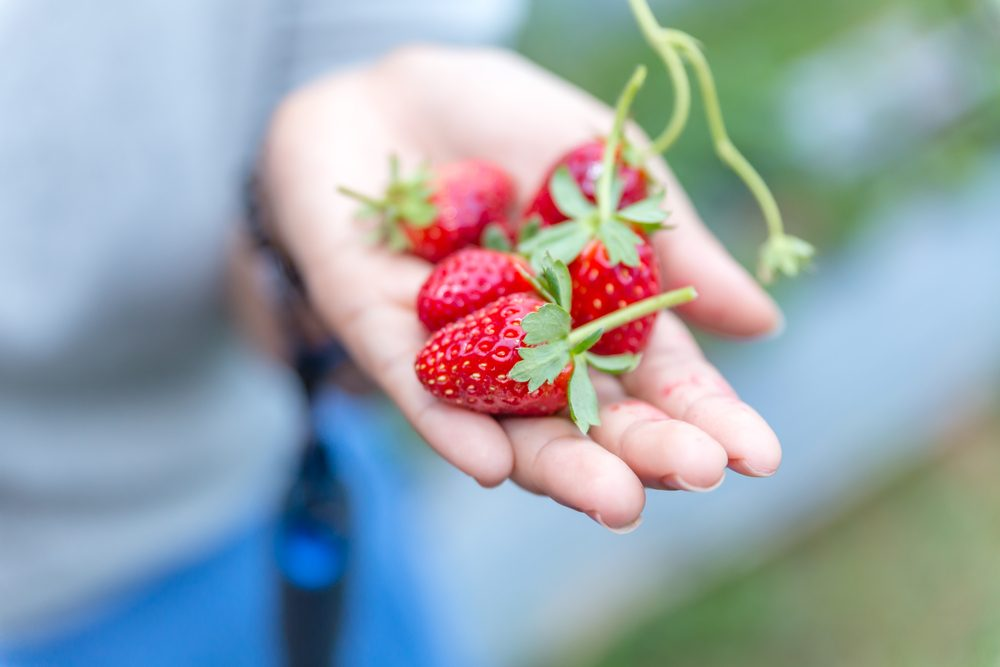 woman holding strawberries_Eat for glowing skin
