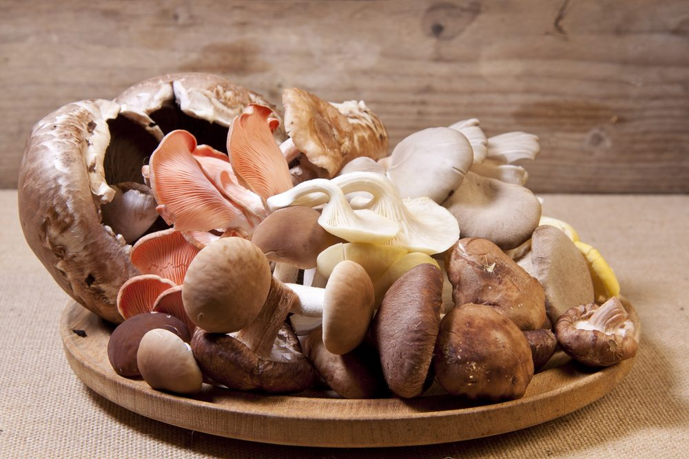 A wide variety of bizarre mushrooms