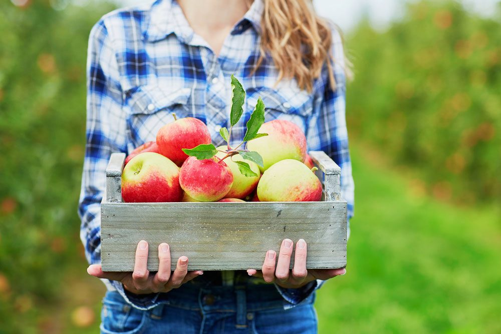 health benefits of apples, a woman holding a crate of apples