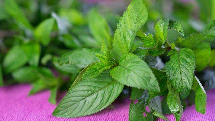 health benefits of herbal tea mint