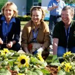 Send a virtual sunflower to help fight ovarian cancer