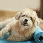 Yoga With Your Dog: Is Doga Really a Thing?