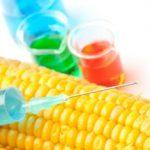 Debate: Should Canada label GMO foods?