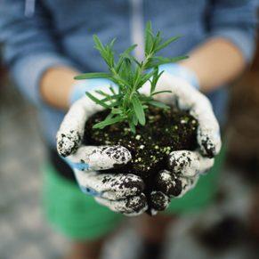 How gardening heals