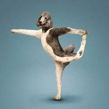 yoga dogs 5
