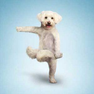 Dogs doing yoga!