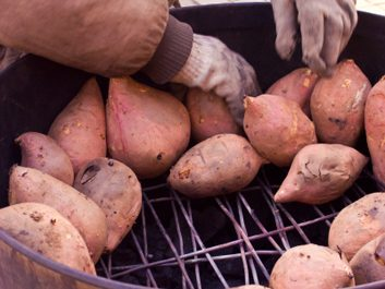 baked yams sweet potatoes