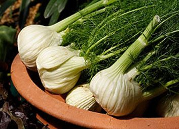 fennel large