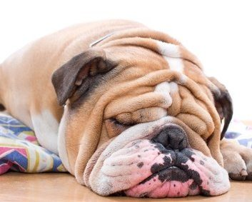 Is your pet at risk for obesity?