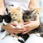 News: Why are 'cat ladies' more likely to commit suicide?