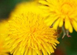 Natural home remedies: Warts