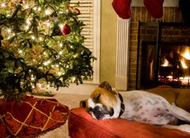 How to plan for a pet-friendly holiday season