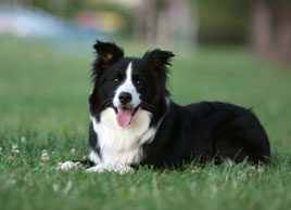 Why dog adoption can improve your health