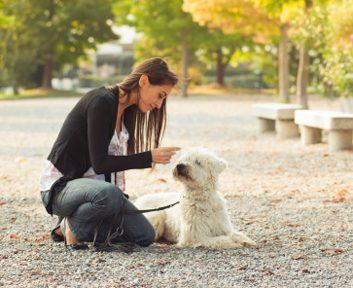 dogpethealthwalkoutside
