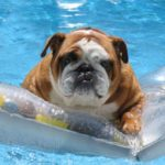 How to keep your pet safe around water