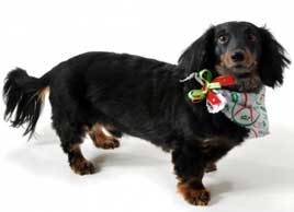 How to enjoy the holidays with your pet