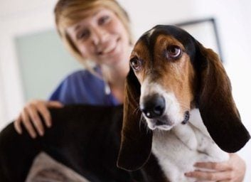How your dog could be a blood donor