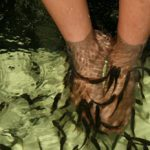 Trend alert: Would you get a pedicure from a fish?