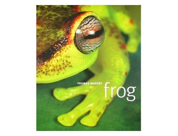 frog-21201007.jpg