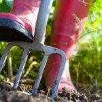 4 fall gardening tasks