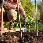 The 5 best foods to grow at home