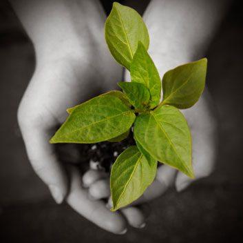 hands plant tree