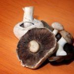 Golden State Mushroom Soup