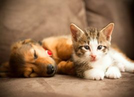 Can cats and dogs catch a cold from you?