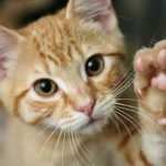 News: Cat-allergy vaccine in the works