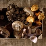 5 Health Benefits of Mushrooms