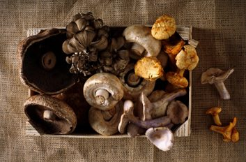 Health Benefits Of Mushrooms In Weight Loss