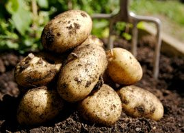 Why potatoes are healthy