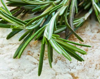 fresh herb rosemary