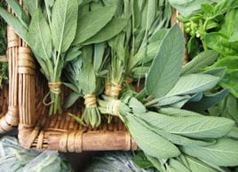 How sage can help your health