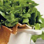 sophie-dahl-lettuce-soup
