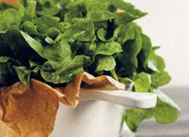 Sophie Dahl's Lettuce Soup Recipe