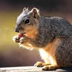 Nuts may reduce heart disease risk