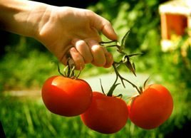 10 ways to cook tomatoes