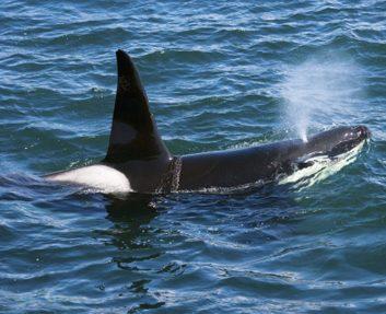 whale ocean sea