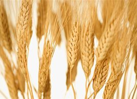 How cutting gluten could be bad for your health