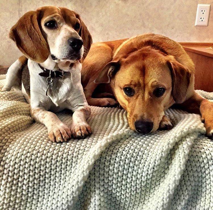 Guy and Bogart