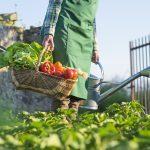 9 Tips For Starting Your Own Vegetable Garden