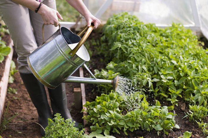 watering-plants