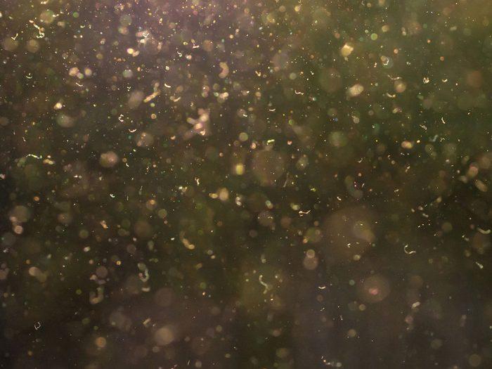 watery eyes | pollen